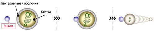 Антибактериальный / противогрибковый Биофильтр